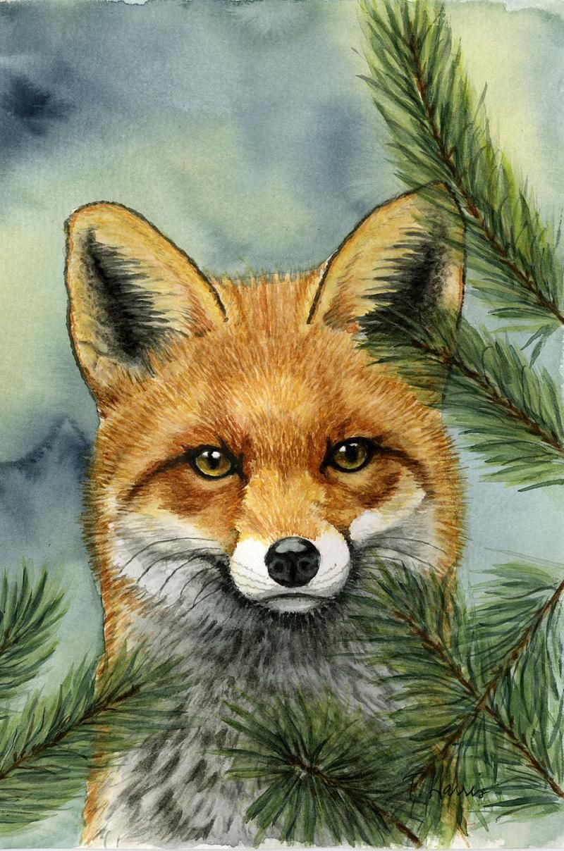 Wildlife Painting Red Fox 5x7 Print From Original Watercolor