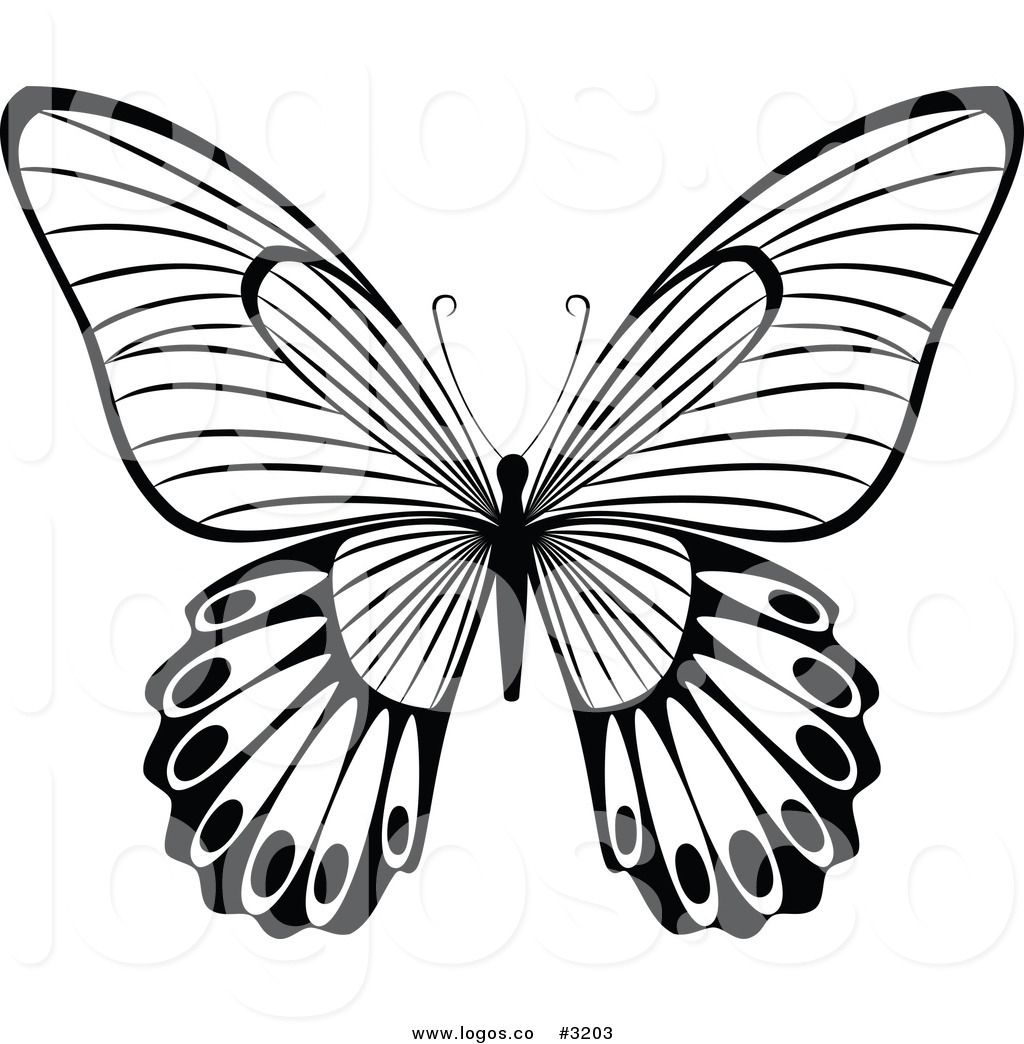 Royalty Free Vector of a Black and White Butterfly Flying