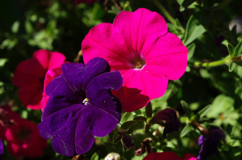 Pink purple flowersg 1000664 pixels mood board colour scheme explore pink and purple flowers mood boards and more mightylinksfo Choice Image