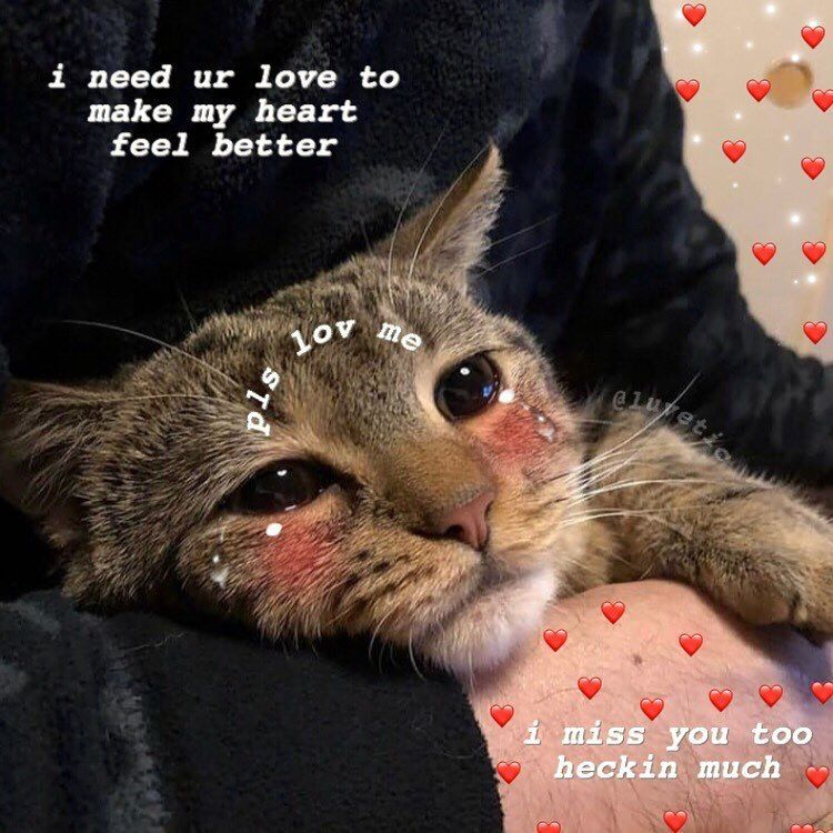 Crying Cat Wholesome Meme - Best Cat Wallpaper