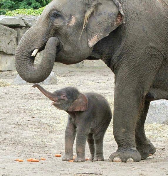 Hauptstadt Zoo - Tierpark - Berlin   - Animals -