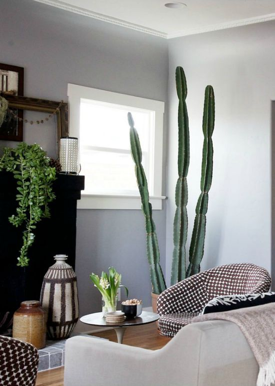 Indoor plants cacti cactus house inspiration pinterest for Cactus decoracion