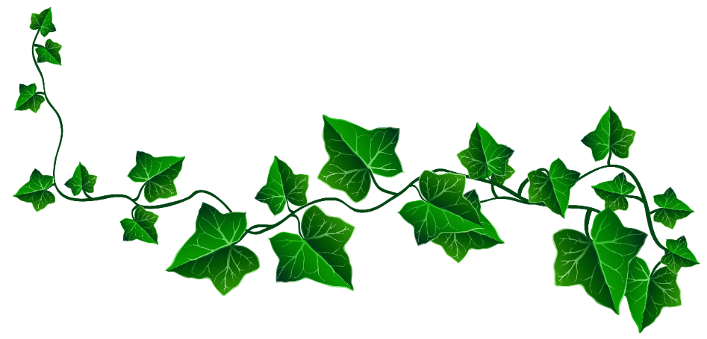 Vine Ivy Decoration Png Clipart Picture Clip Art Library Ivy Tattoo Leaf Drawing Vine Drawing