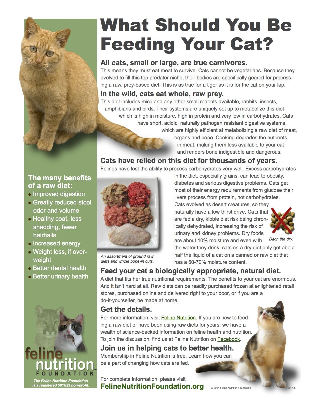 Feline Nutrition One Page Guides Cat Nutrition Cat Diet Cat Care