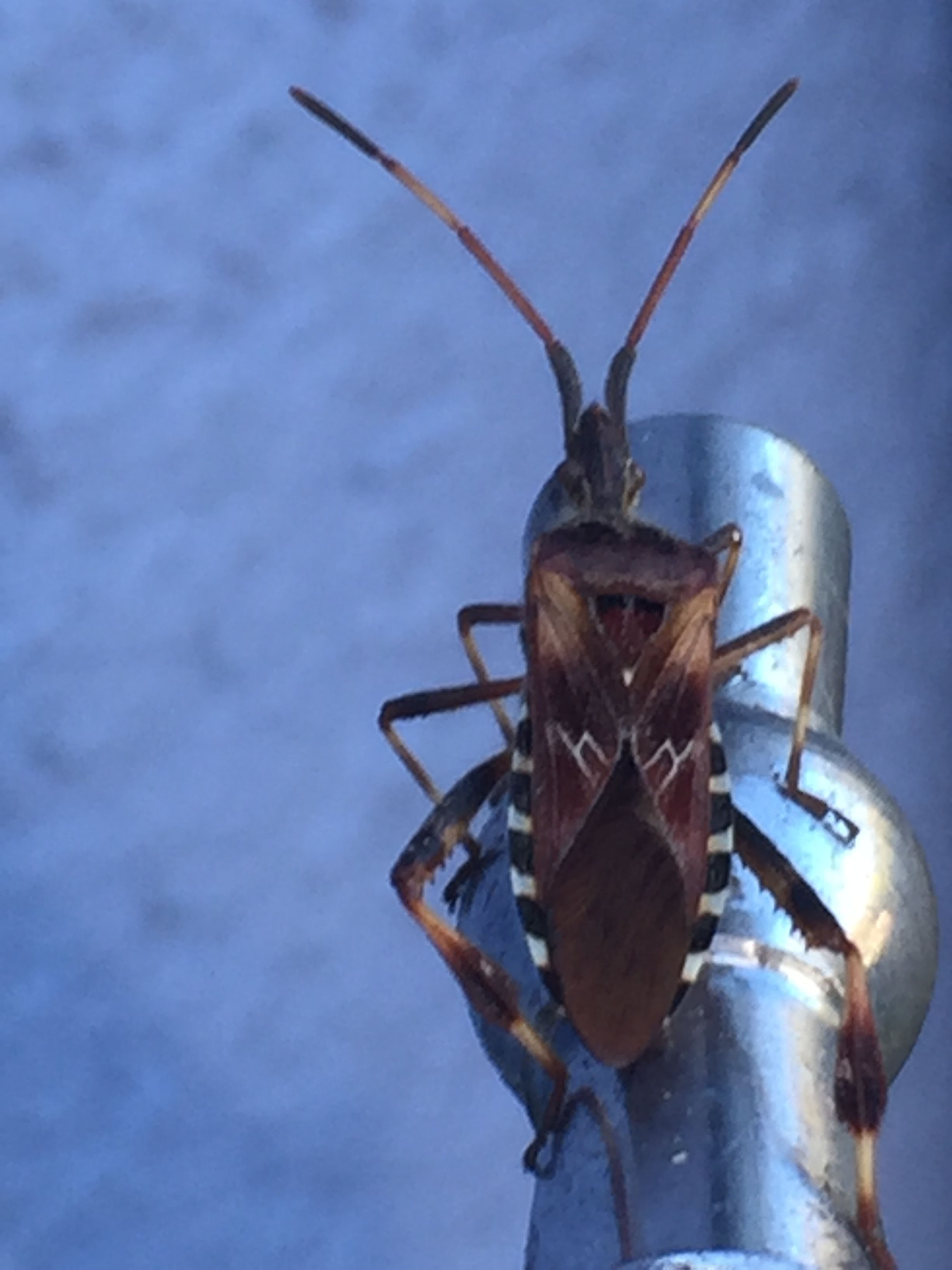 Heute Bei Mir Im Garten Auf Dem Wasserhahn Kennt Jemand Diesen Käfer Wasserhahn Hähnchen