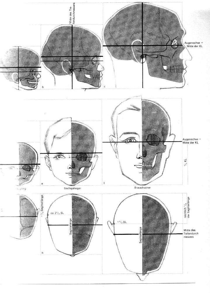 Gottfried Bammes - Der Nackte Mensch   Anatomy   Pinterest   Anatomy