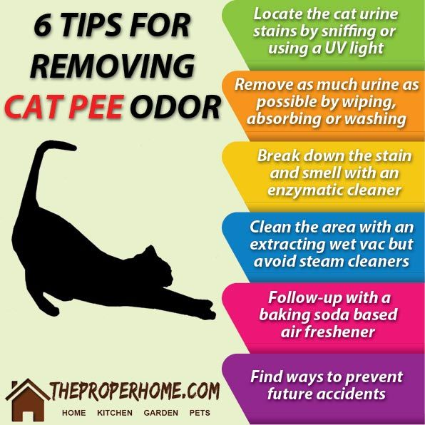 How To Clean Cat Smell From Carpet