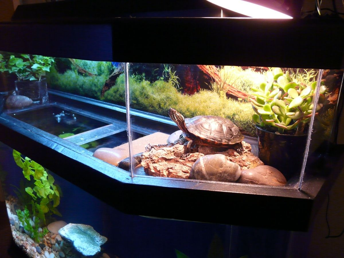 Turtle Tank Decor 17 Best Images About Turtle Tank On Pinterest Aquarium Stand