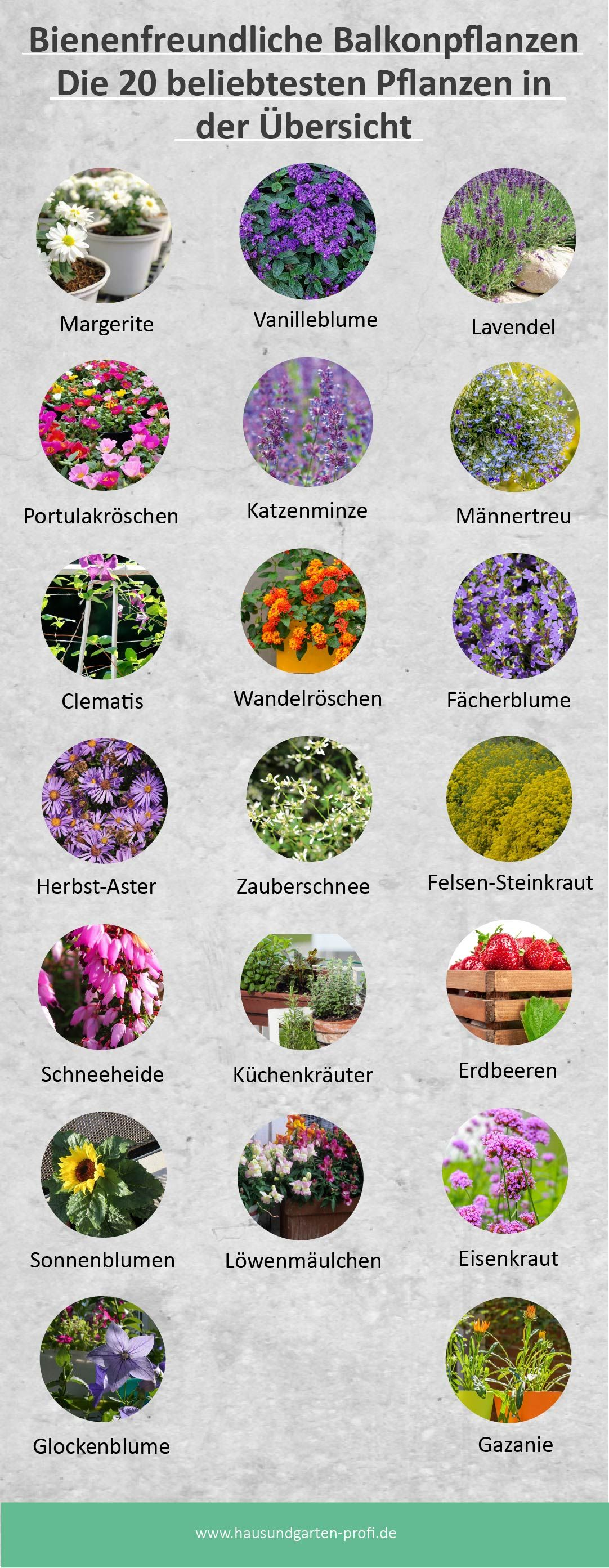 Bienenfreundliche Balkonpflanzen- Die 20 beliebtesten Pflanzen in der Übersicht