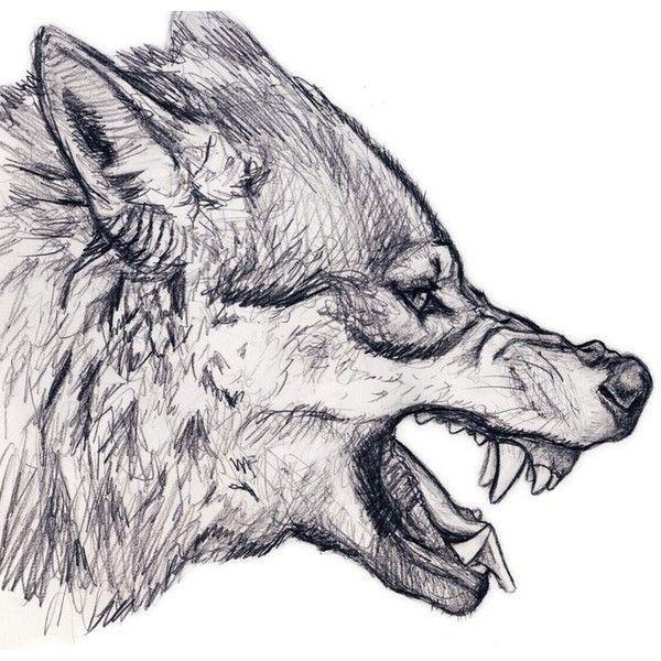 Pin de Cesar Boccanegra en Lobo en 2018   Pinterest   Dibujo, Lobos ...