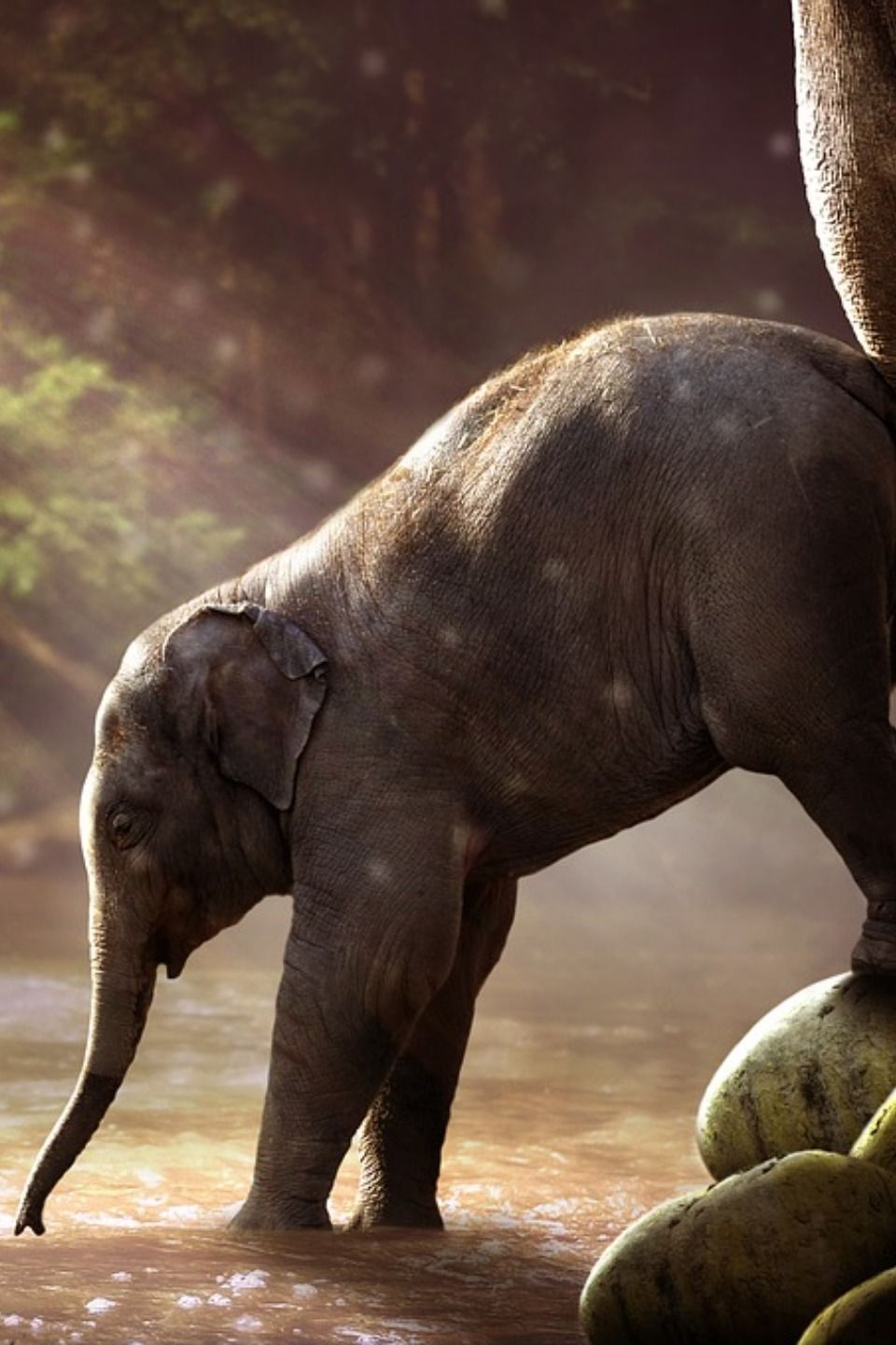 Pin By Martha Allen On Animals Nature Elephant Cat Pet