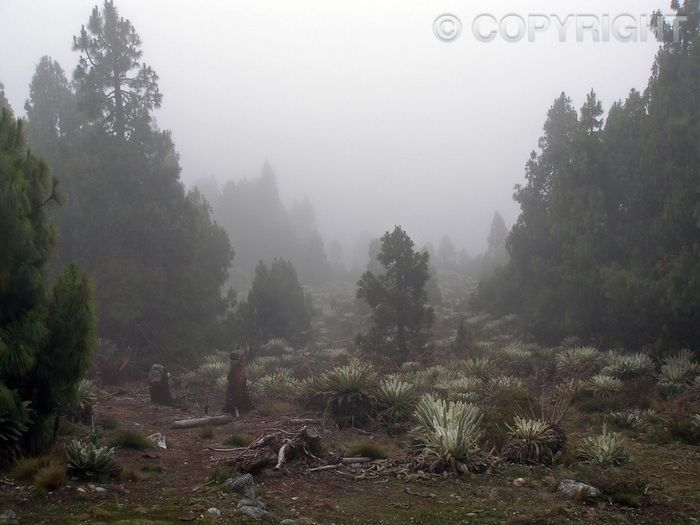 El Páramo de Piñango - Mérida - OLYMPUS DIGITAL CAMERA