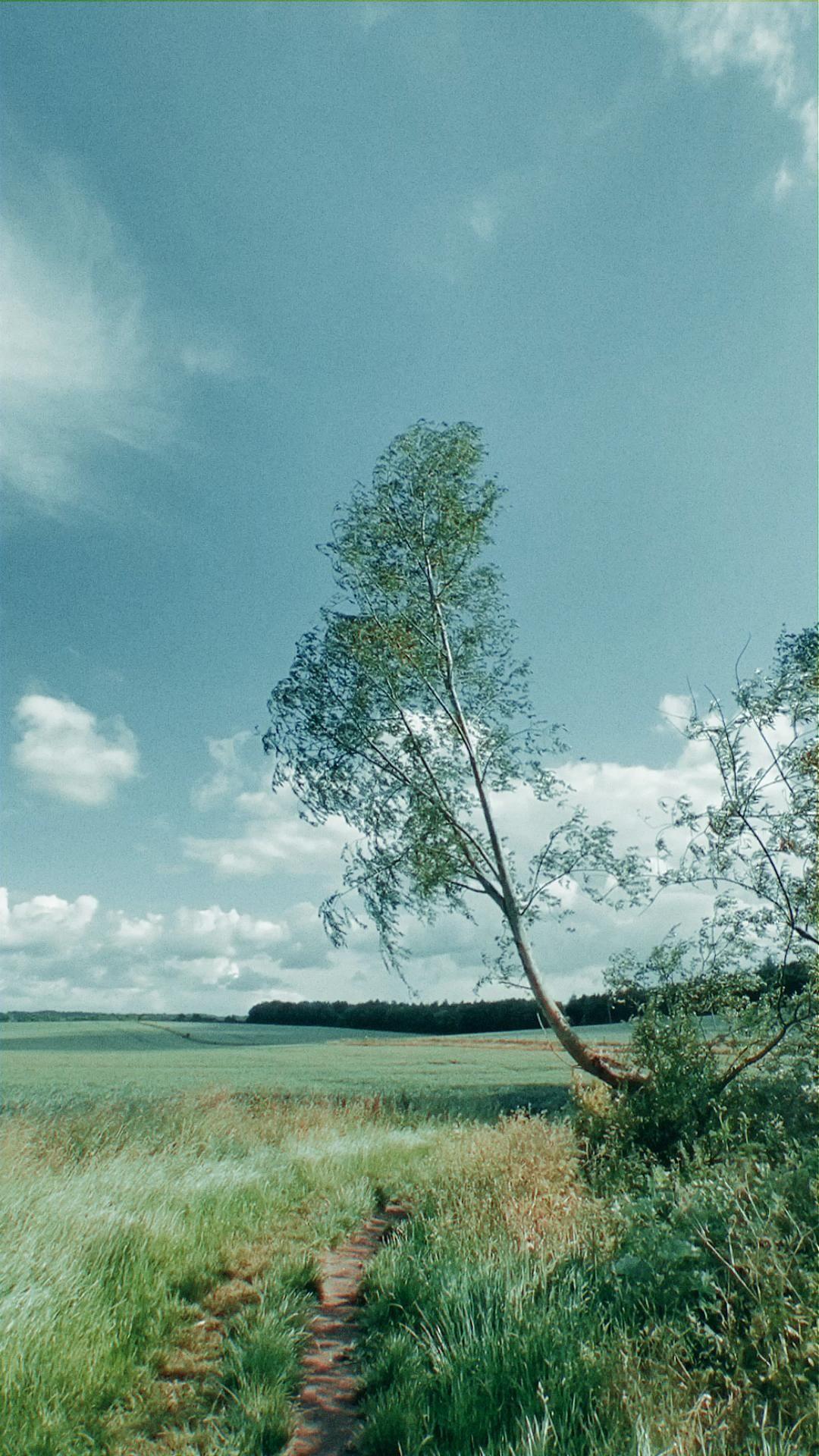 Windy days | Carla Heyworth Photography