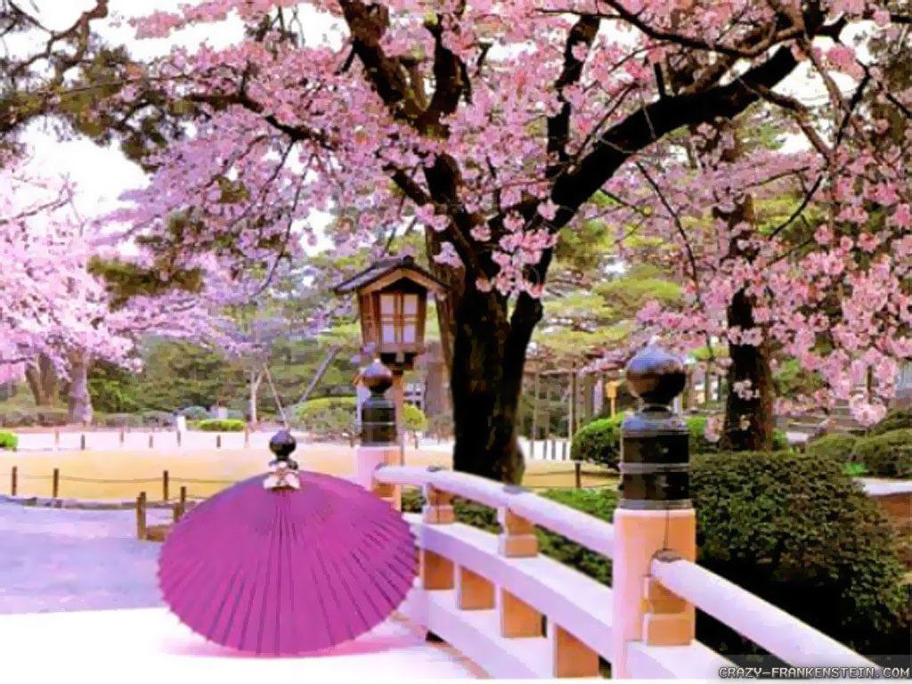 Spring Time In Japan.