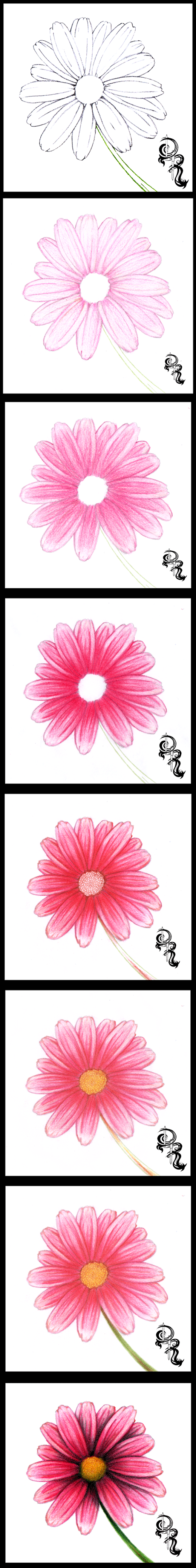 How To Draw A Daisy With Colored Pencils A Stepbystep Image Of