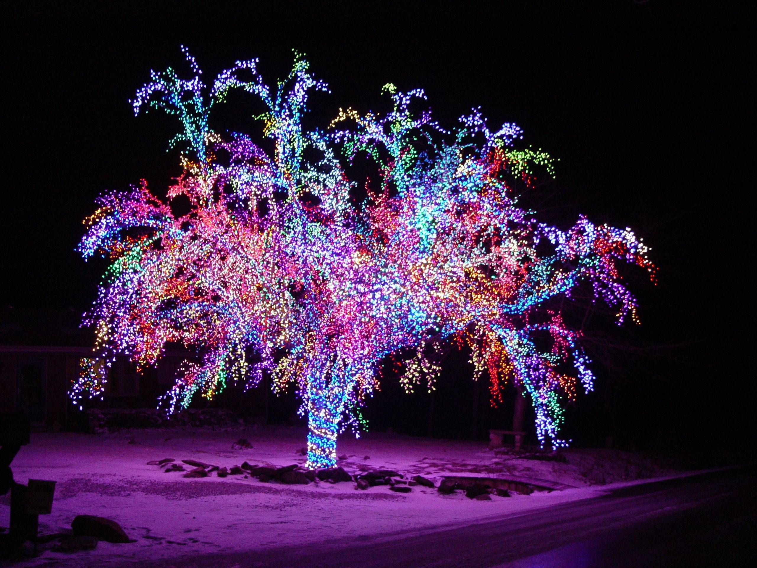 This crab apple tree has over 75,000 lights lining every branch ...