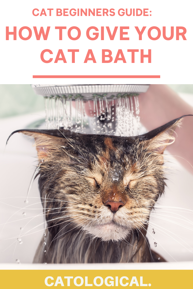 How To Bathe Your Cat Best Conditioning Shampoo Ratings Reviews In 2020 Cat Shampoo Cats Cat Care