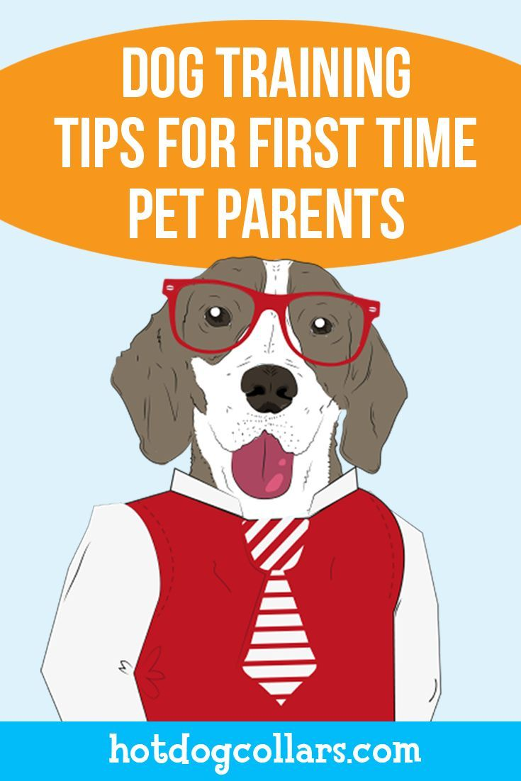 Dog Training Tips Infographic Dog Training Dog Training Tips