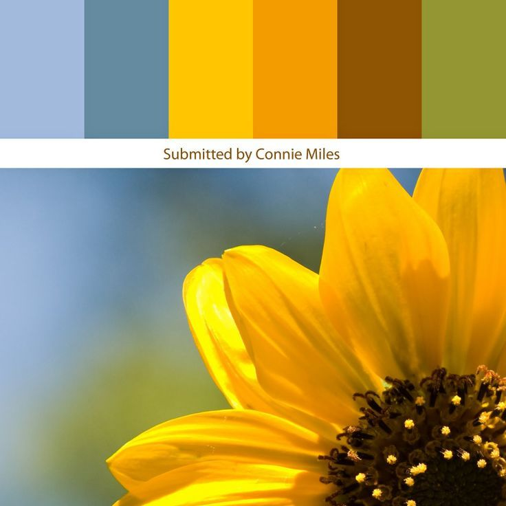Sunflower Color Palette Google Search Sunflower1