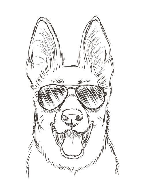 Ha Now THIS Is My Spirit Animal Not Just A Shepard But One With Aviators Haha