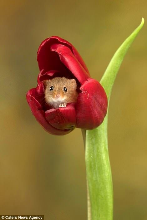 Photographer captures moment harvest mice play among the flowers  Photographer captures moment harvest mice play among the flowers