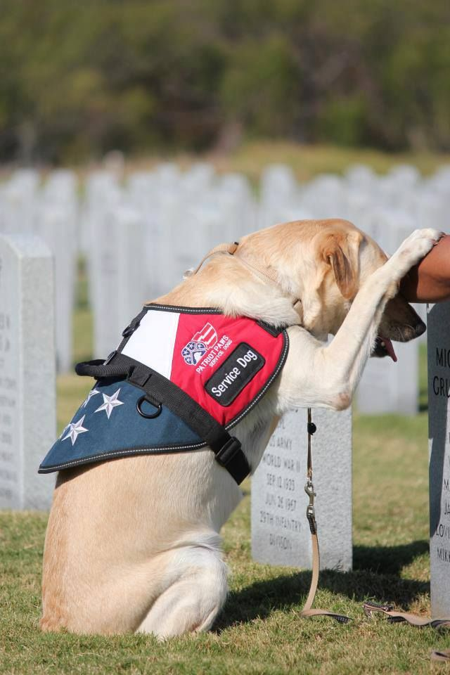 Today we remember the men and women who sacrificed everything for our country. Let's never forget our fallen heroes.