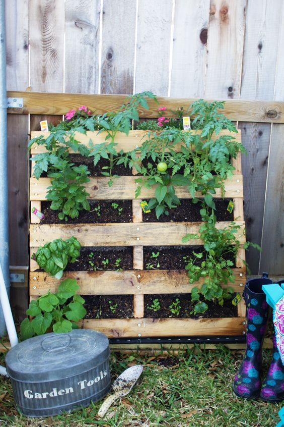 How to make your own vertical pallet vegetable herb garden for Vertical pallet garden