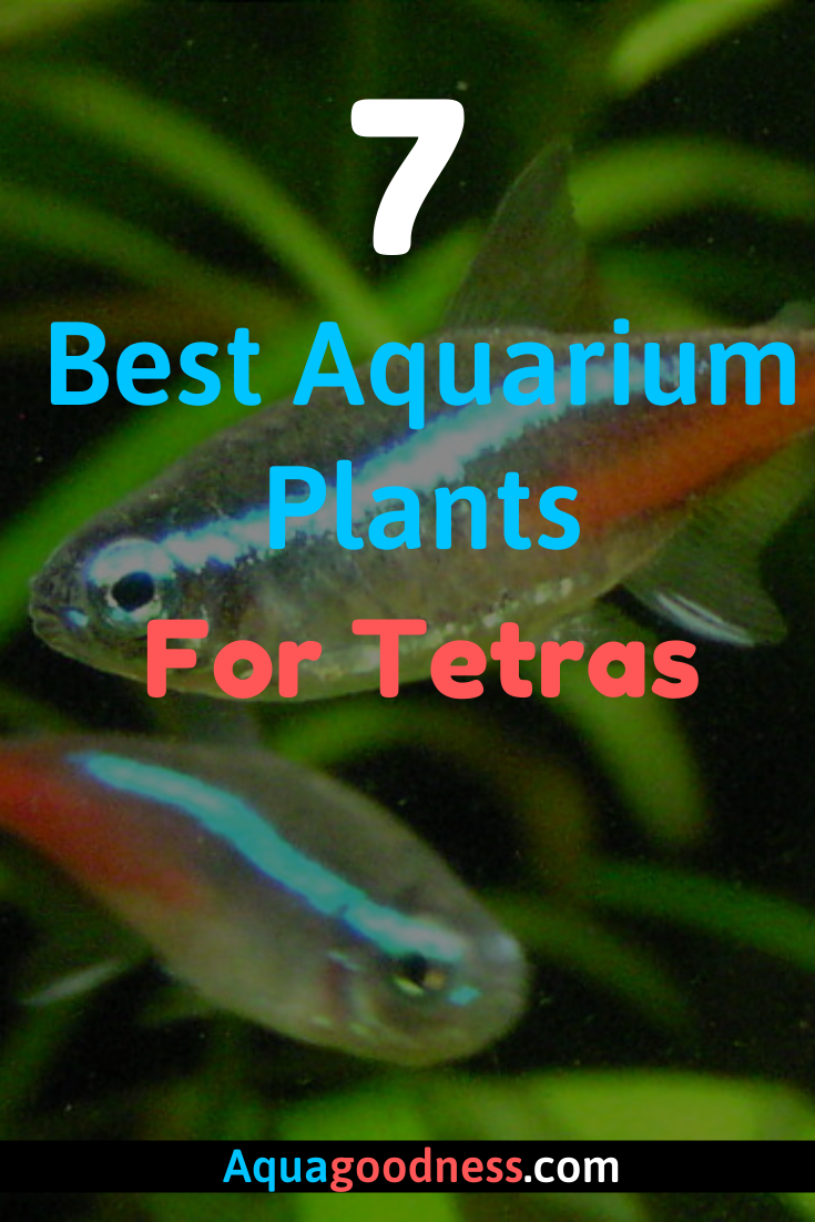 7 Best Aquarium Plants For Tetras Planted Aquarium Freshwater Aquarium Plants Fresh Water Fish Tank
