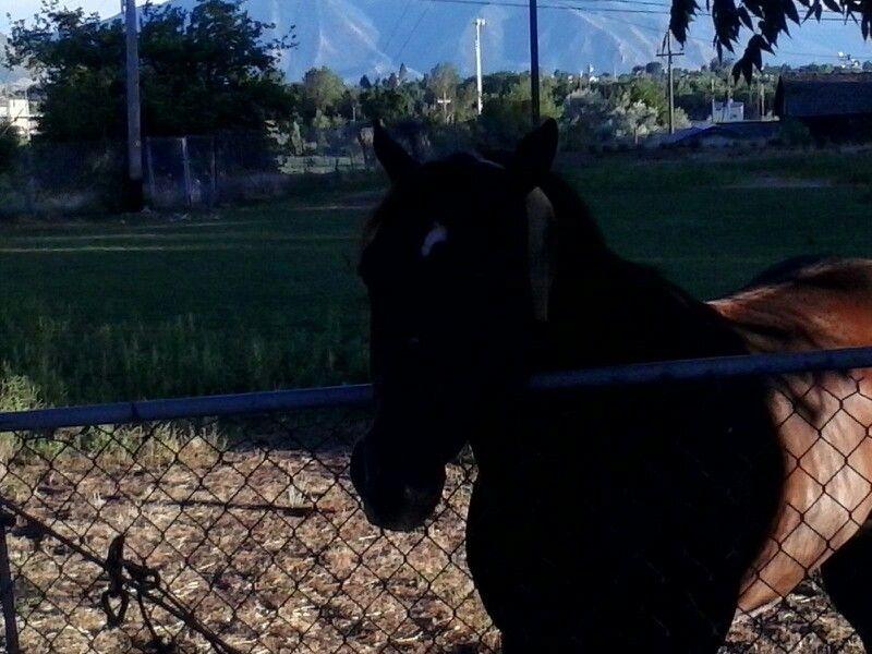 Horse saying hi. Springville, Ut.