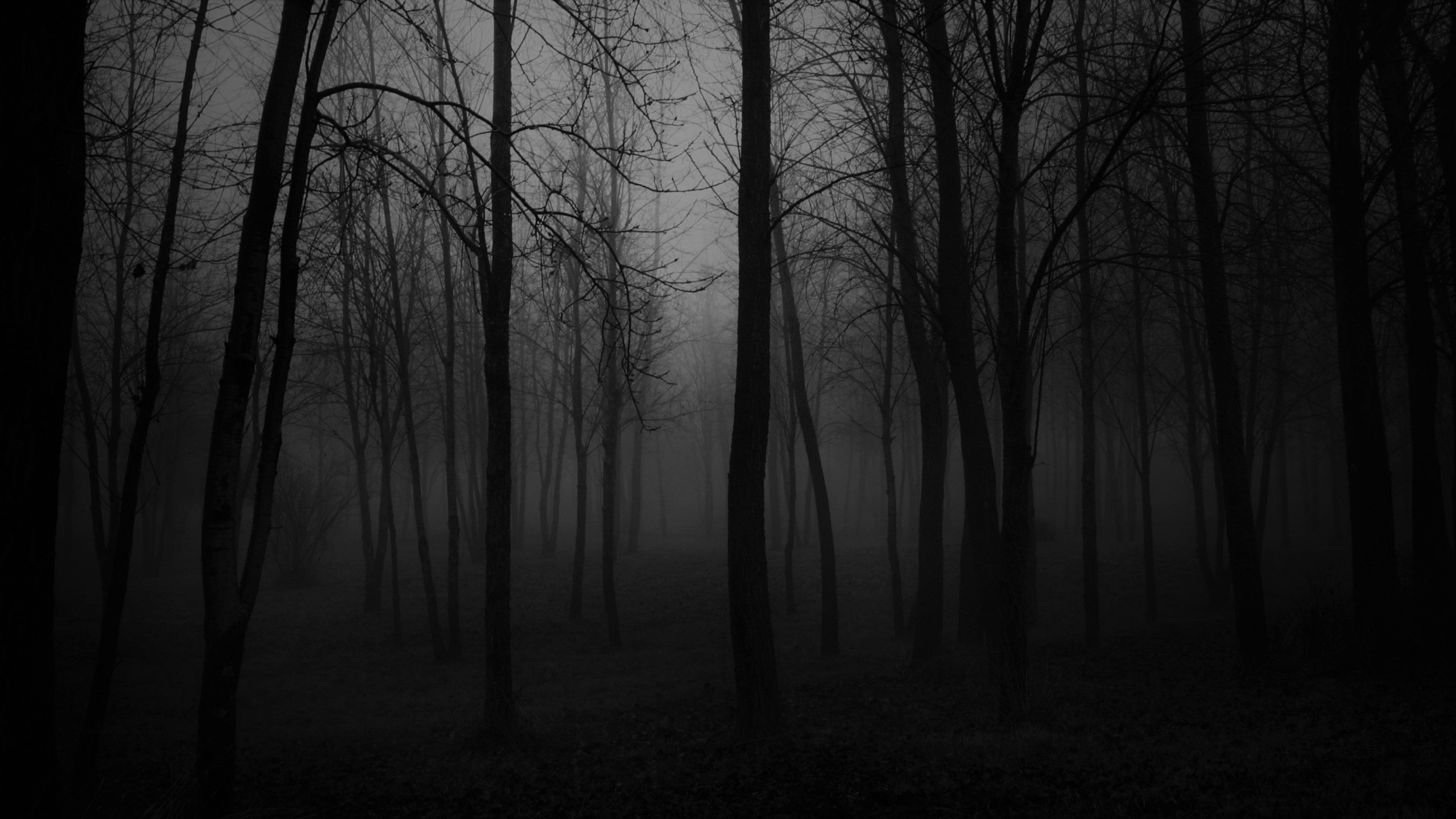 Black Black And White Forest Nature Foggy Atmosphere Darkness Fog Tree Twilight Dark Forest Cree Scary Backgrounds Forest Background Forest Wallpaper