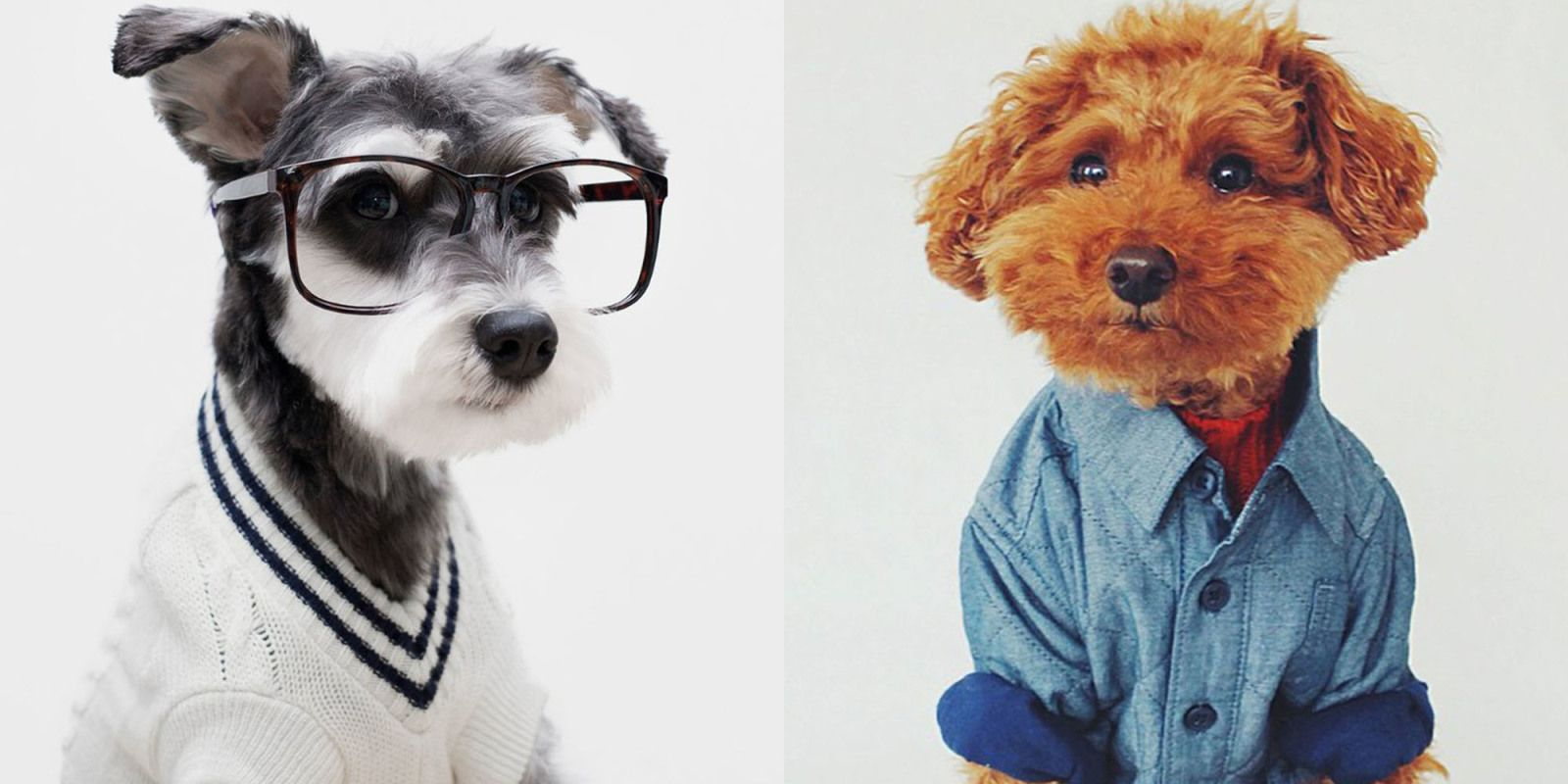 Mr porter taps stylish dogs of instagram for spring fashion tips
