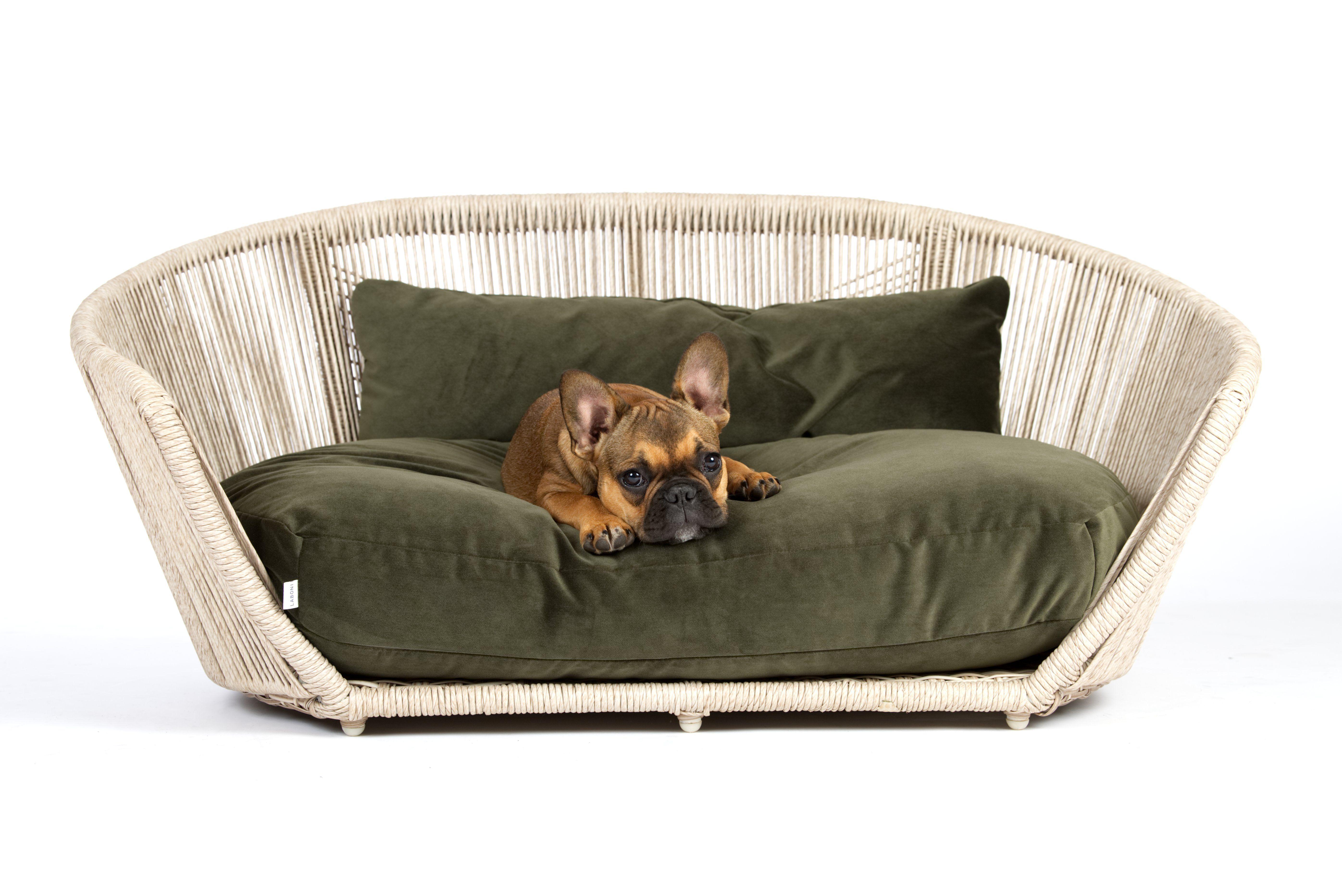 Vogue Dog Bed I Laboni Dog Bed Sleeping Dogs City Dog