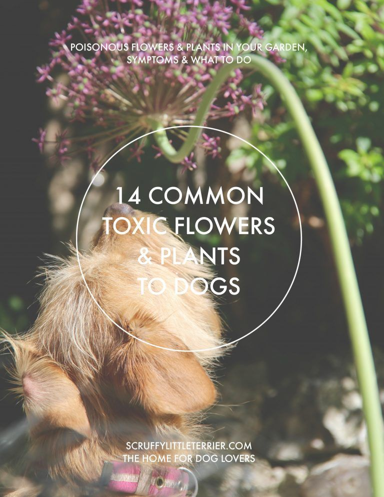 Poisonous Flowers Plants To Dogs 14 Common Toxic Flowers Plants To Dogs Poisonousplants Plants Poisonous To Dogs Toxic Plants For Cats Planting Flowers