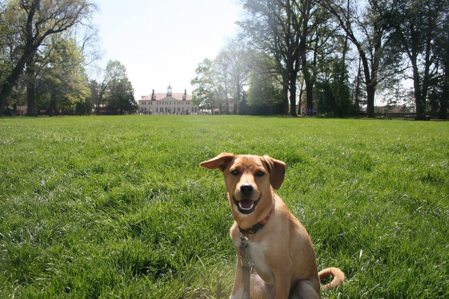 At mount vernon the pooch is dog friends pooch