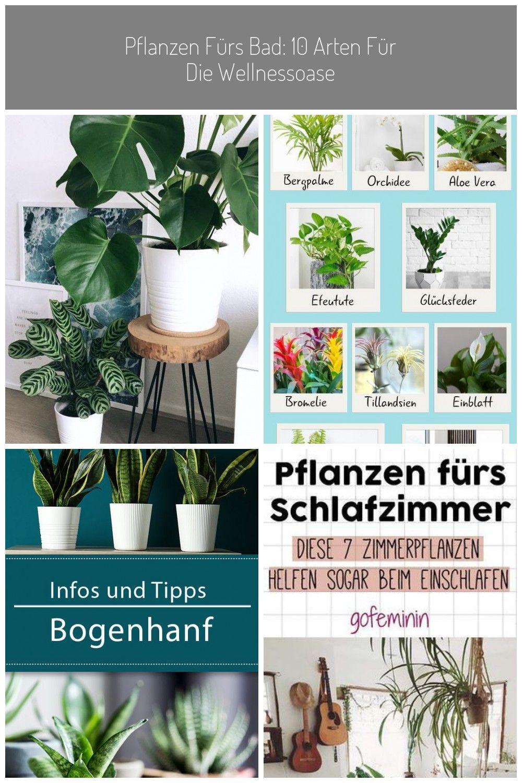 Pin Auf Plant
