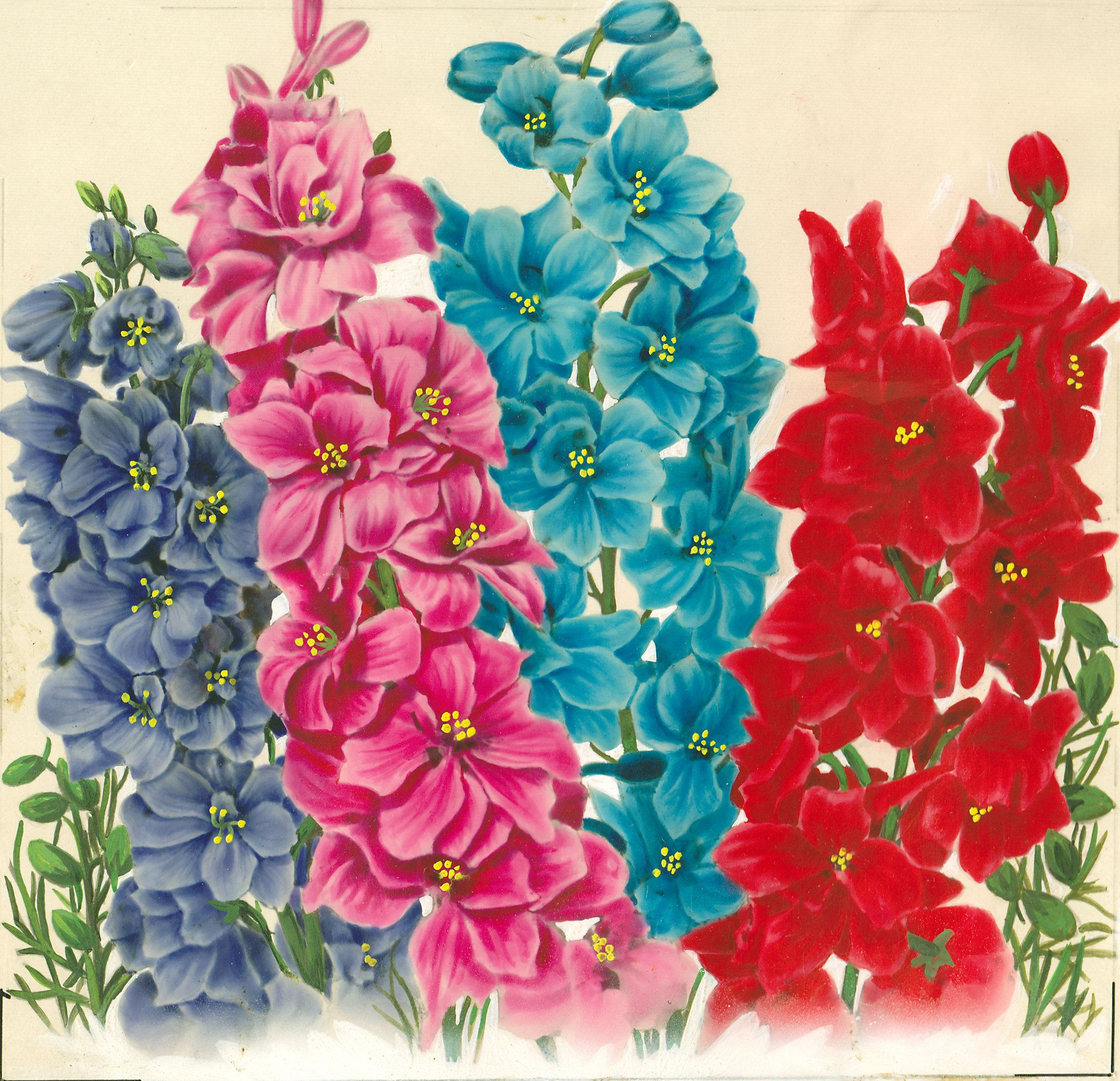 Larkspur-Annual Mixed original watercolor illustration for a series ...