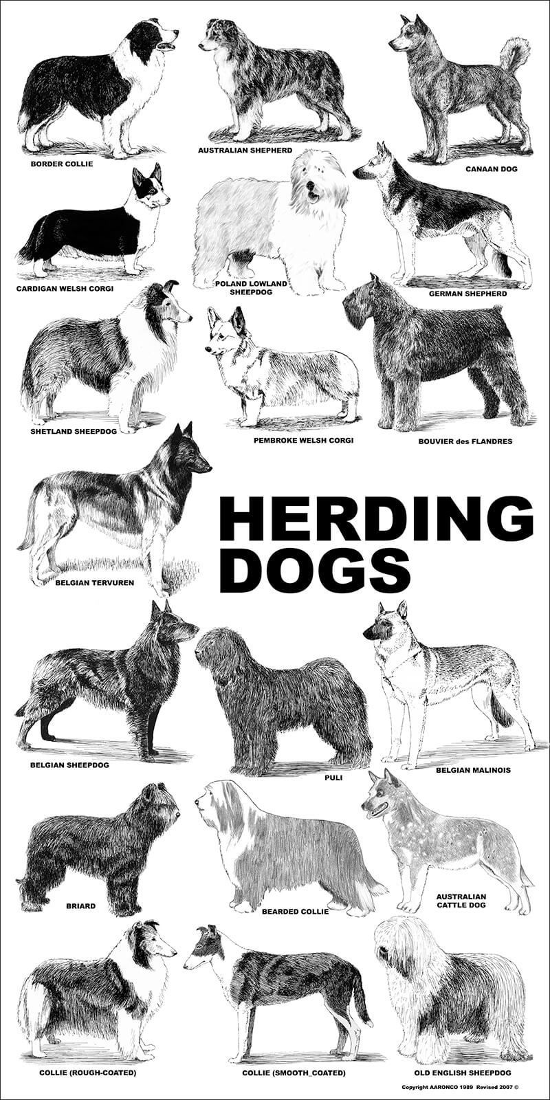 Aaronco Poster Herding Dogs Barkleigh Store Herding Dogs