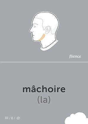 Mâchoire #CardFly #flience #human #french #education #flashcard #language