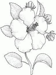 Resultado de imagen para dibujos de flores a lapiz  Dibujos 3