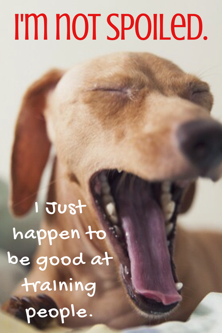 Dog Quotes I'm Not Spoiled. Dog breath, Dog coughing