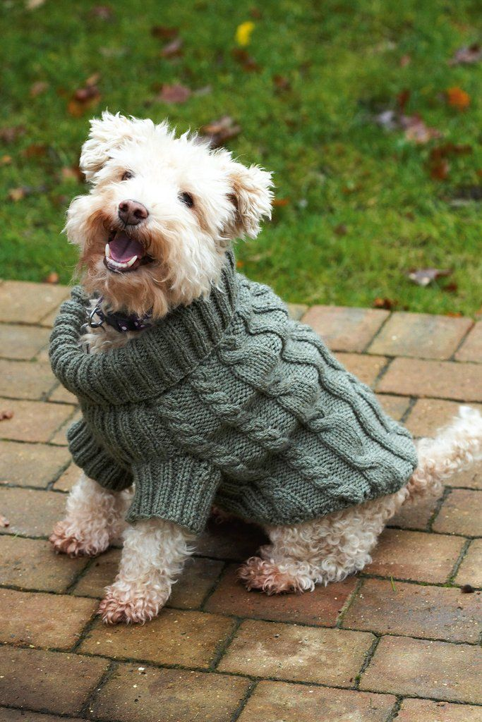 Keep your favourite four-legged friend super comfy in chilly weather ...
