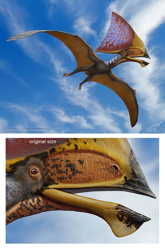 Tupandactylus X-Ray 3D Collectible Pterosaur Card