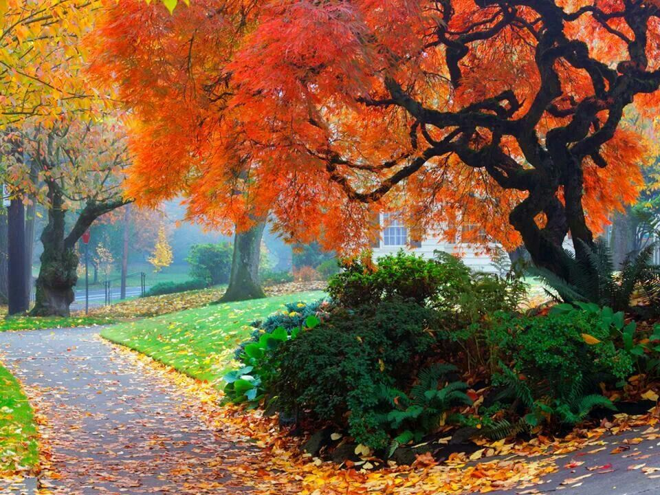 Fall! If you need some landscaping done around your house or