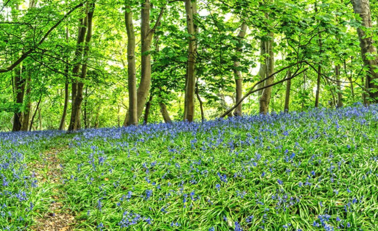 Download Nature Forest Trees Flowers Path View High
