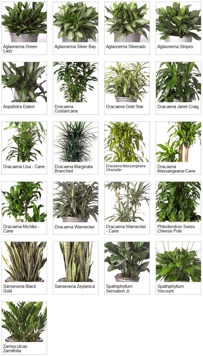 Indoor Tropical Plants Indoor Tropical Plants Plants 640 x 480