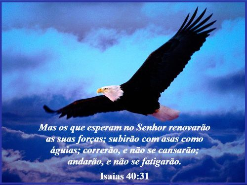 Esperar No Senhor Isaias 40 31 Esperar No Senhor Nas Asas Do