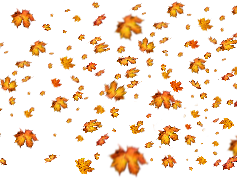 Fall Leaves Png Overlay For Photoshop Fall Leaves Png Photoshop Nature Autumn Leaves