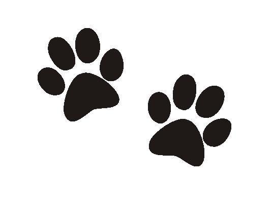 patitas gatos - Buscar con Google | Vinilos * | Pinterest | Gatos ...