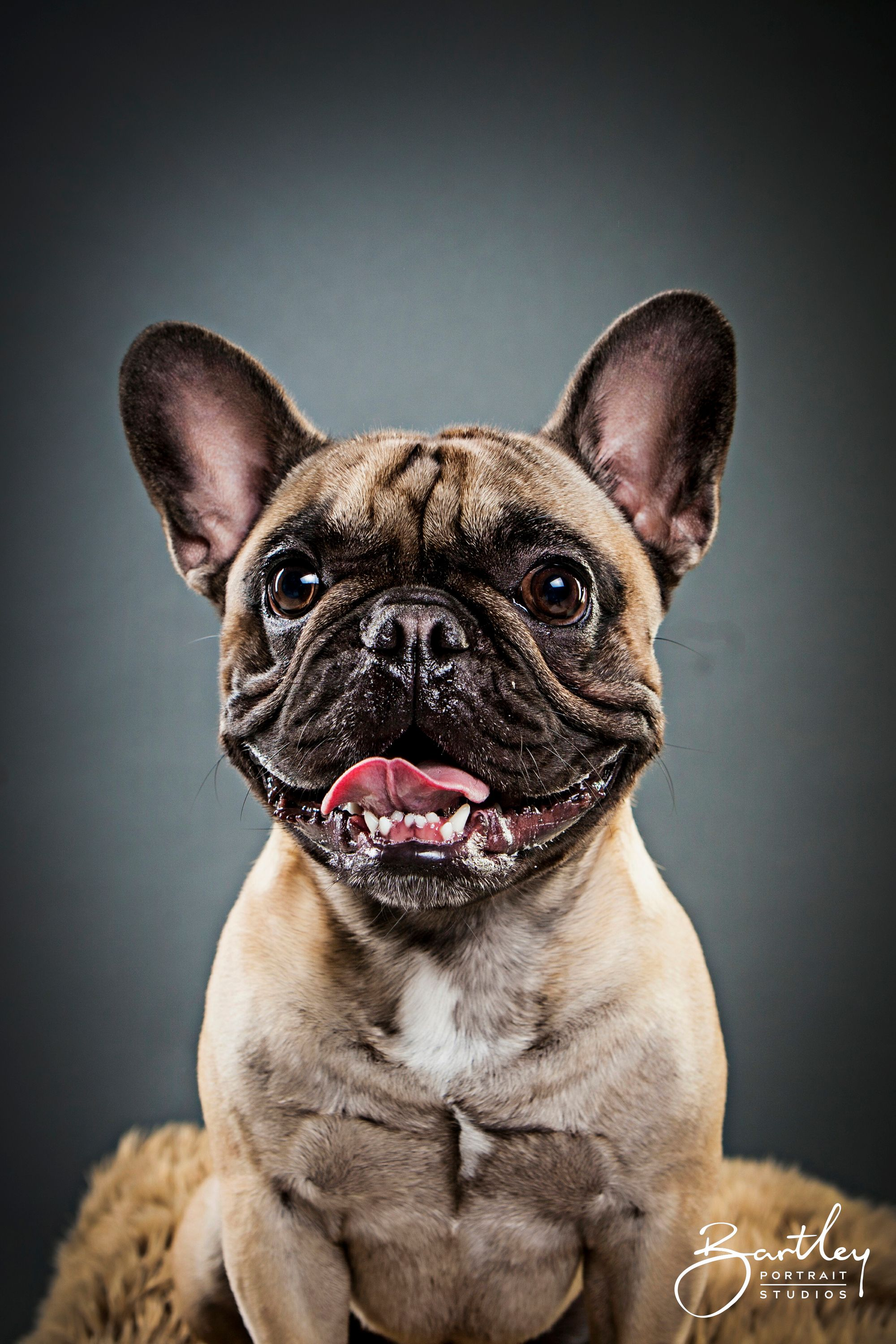 Look At That Smile Pet Portrait Photography Inspiration By