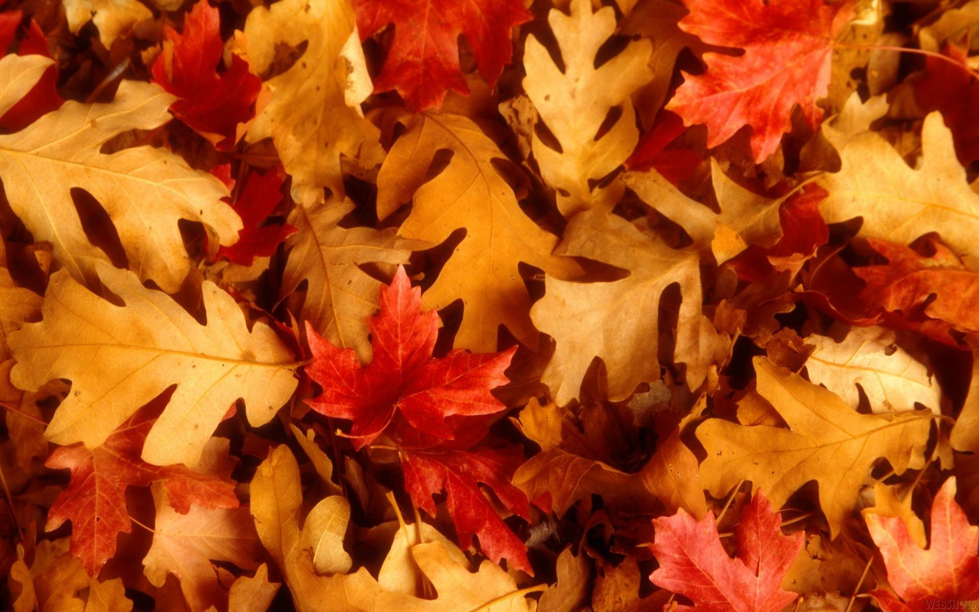 Fall Leaves Wallpapers Widescreen Free Download Wallpaper Nature Flowers Autumn Leaves Wallpaper Autumn Leaves